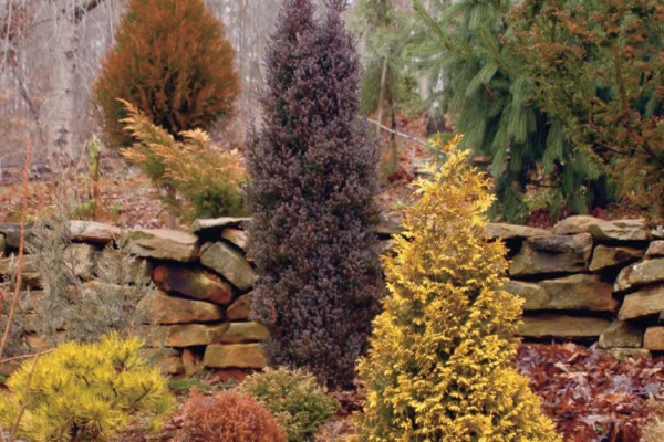 add color evergreen landscaping