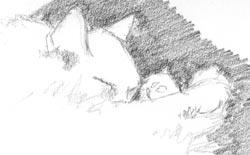 Sketch of My Cat Hazel
