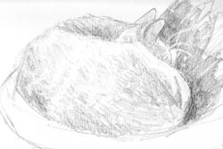 Sketch of My Cat Rusty