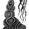 Coral Tresses Drawing