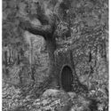 Drawing of an enchanted tree with a door.
