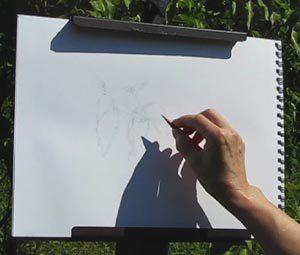 Composing expressive line drawing C. Rosinski