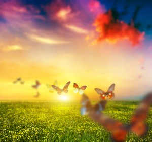 Colorful butterflies flying over spring meadow with flowers. Butterfly group fly towards sun at sunset.