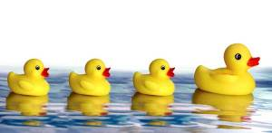 Bath time usually calls for rubber ducks, right? Not when you are bathing horses. You will probably scare the living daylights out of them!.
