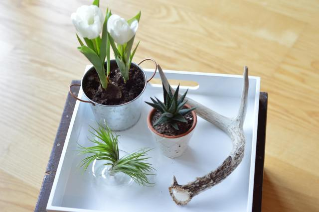 Indoor garden elements displayed on a tray.