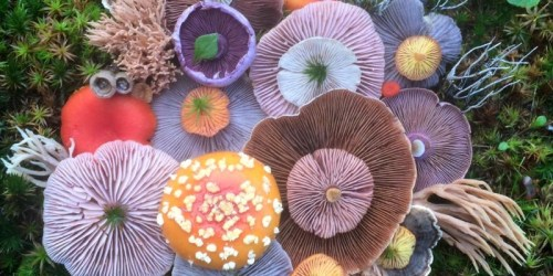 Jill Bliss Photographs Colorful Mushrooms In Artistic Combination