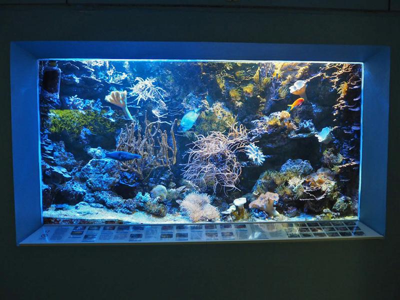 gut gepflegtes Meerwasseraquarium