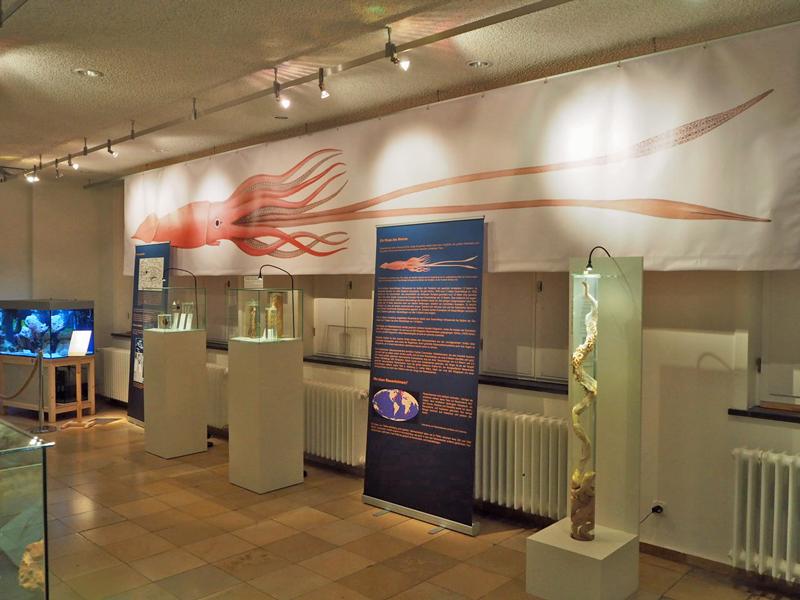 Sonderausstellung Architheutis im Naturhistorischen Museum Braunschweig