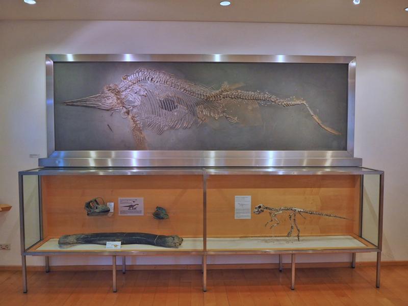 Fossiliendisplay im NHM Braunschweig