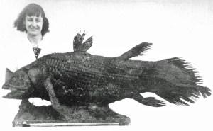 Marjorie_Courtenay-Latimer und der erstentdeckte rezente Quastenflosser - Von Unbekannt: The South African Institute for Aquatic Biodiversity, CC BY-SA 3.0