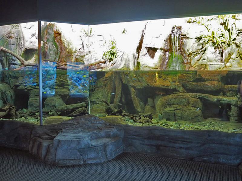 Paludarium mit chinesischem Riesensalamander und Drachenfischen