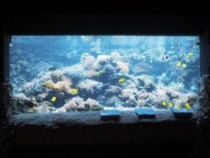 Aquarium mit Weichkorallen, Doktorfischen und Riffbarschen