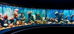 Blick ins Korallenbecken