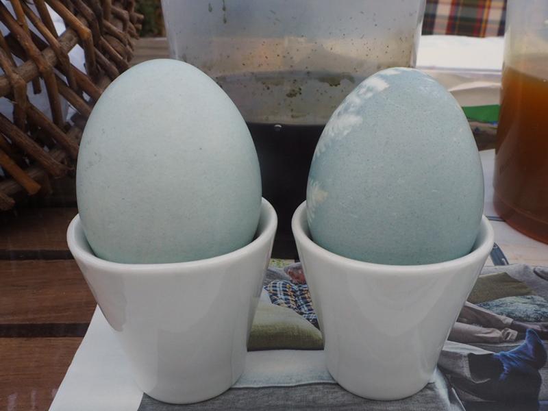 Rückseite der blauen Eier, die Farbe des rechten Eies ist etwas intensiver