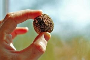 Eine Hand hält eine Samenbombe von der Größe einer Mirabelle in die Kamera