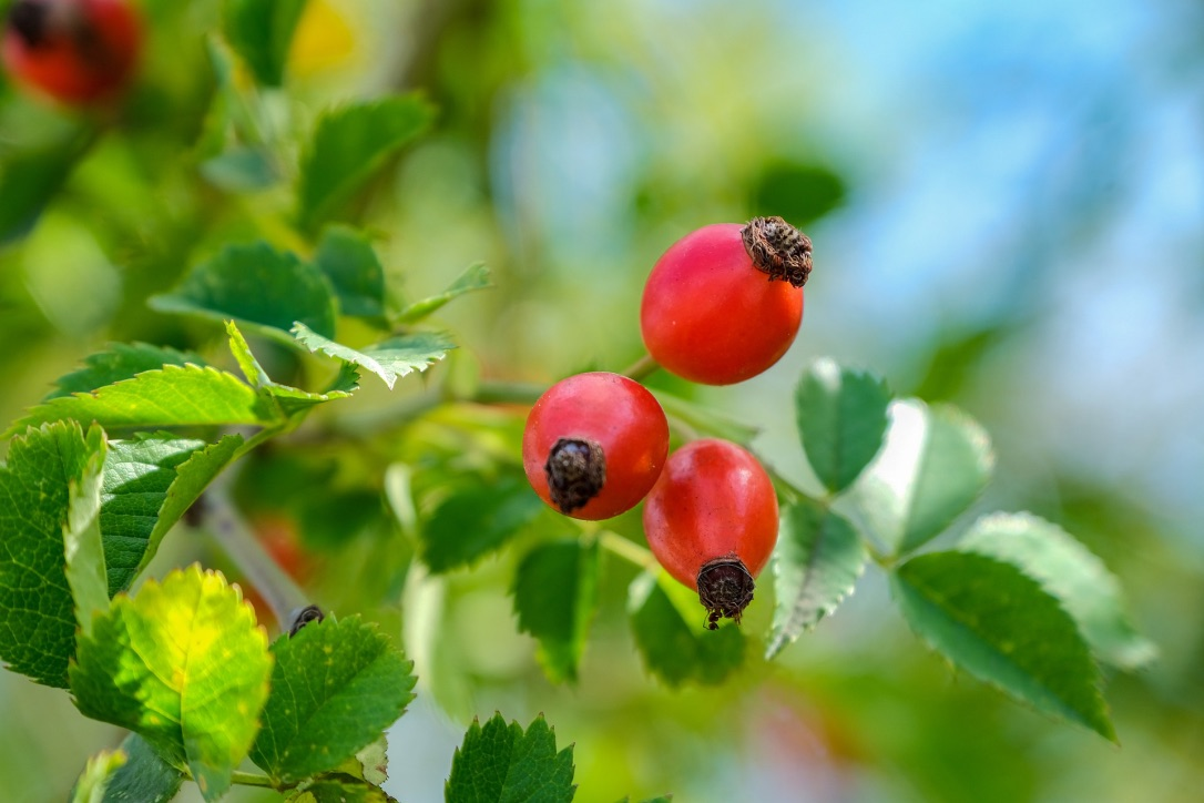 Mythen über Pflanzenöle