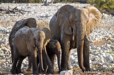 Small familiy