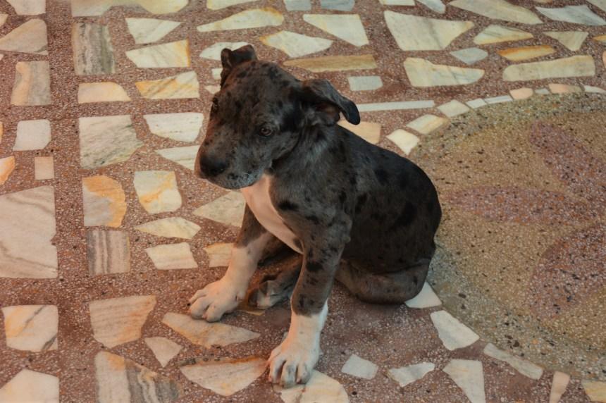 Denis, der Haushund