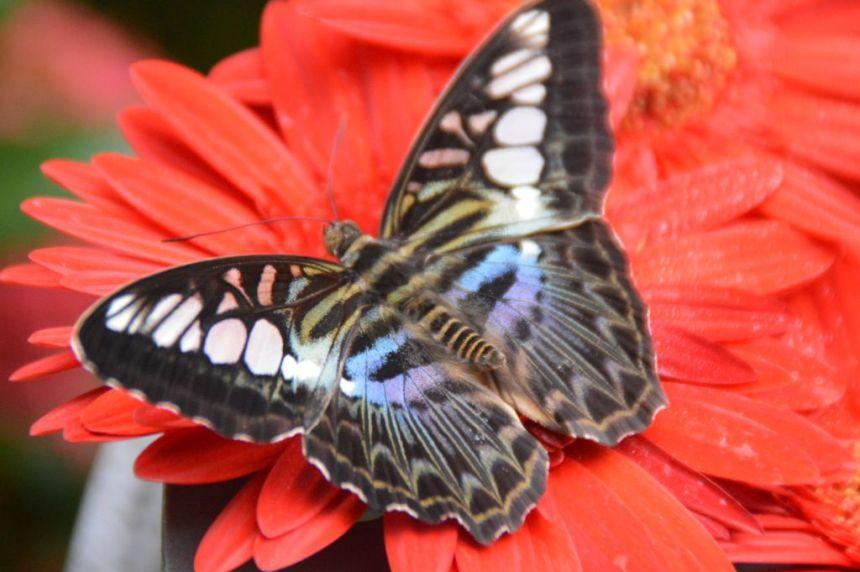 Schmetterling im Tempelgarten