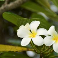 Bali – die grüne Insel?!
