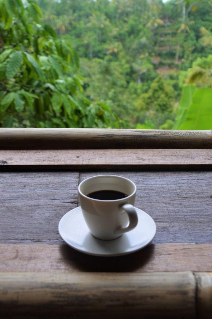 Kaffeeplantage - Luwak Kaffee