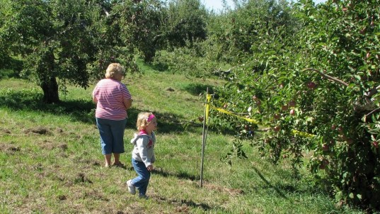 Granny and Charlotte hunting good apples