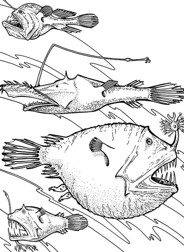 Angler Fish Is Deep Sea Fish Coloring Pages : Best Place