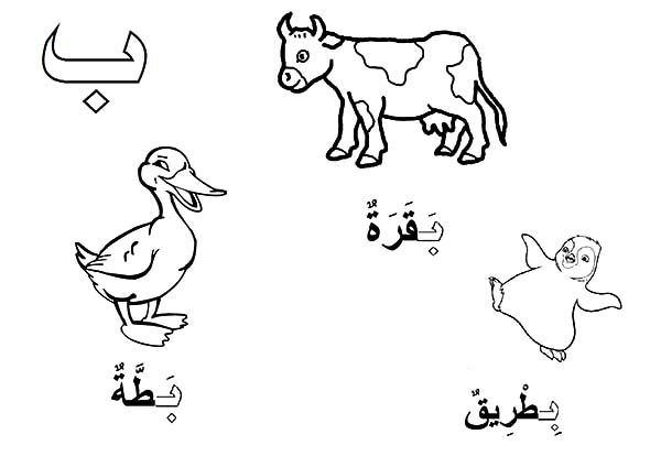 Arabic Alphabet Baa For Duck And Ox Coloring Pages : Best