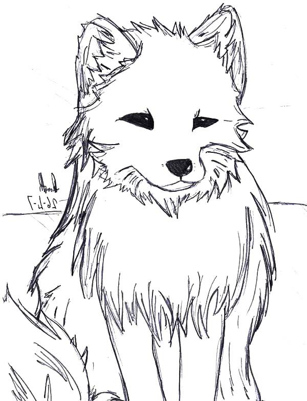 artistic drawing of artic fox coloring pages  best place
