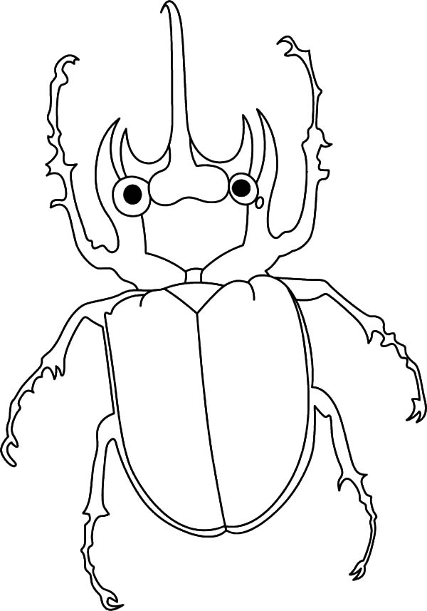 Amazing Animals Beetle Coloring Pages : Best Place to Color