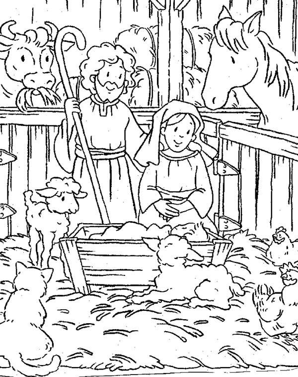 Animals Gather in Stable Where Jesus Was Born Bible
