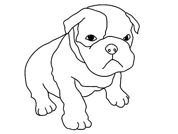 Baby Boxer Dog Coloring Pages: Baby Boxer Dog Coloring