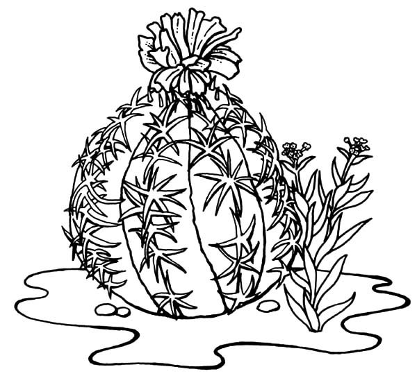 Cactus Outline Coloring Pages Best Place To Color