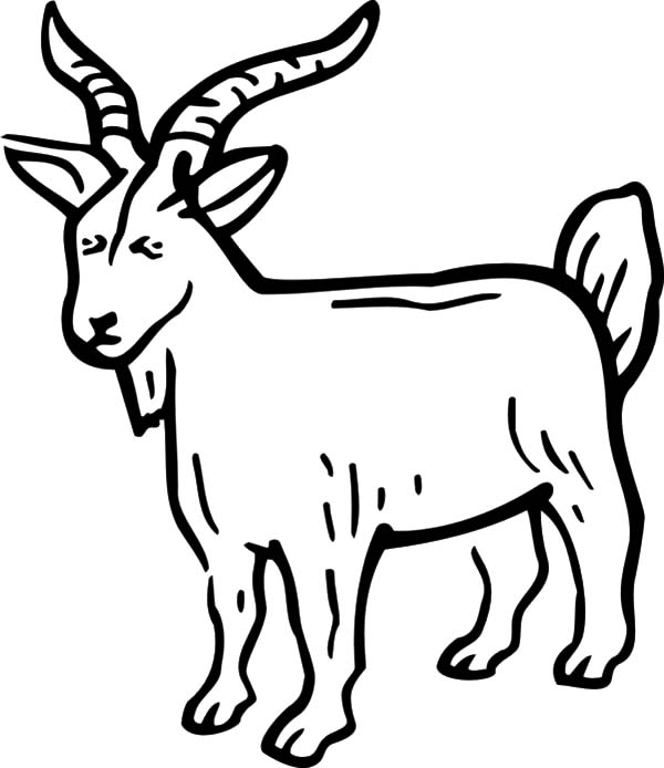 Billy the Goat Coloring Pages: Billy the Goat Coloring
