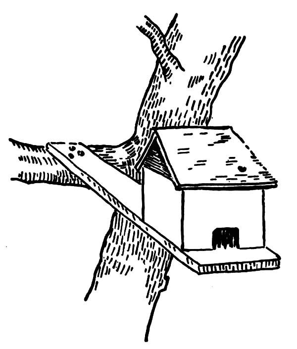 Bird House At The Edge Of Branch Coloring Pages : Best