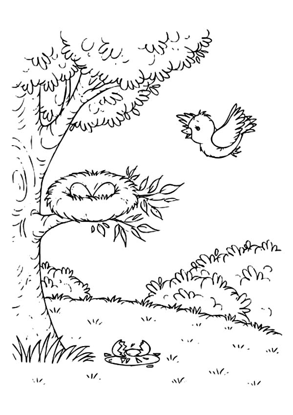 Bird Mother Flying Come Home To Bird Nest Coloring Pages