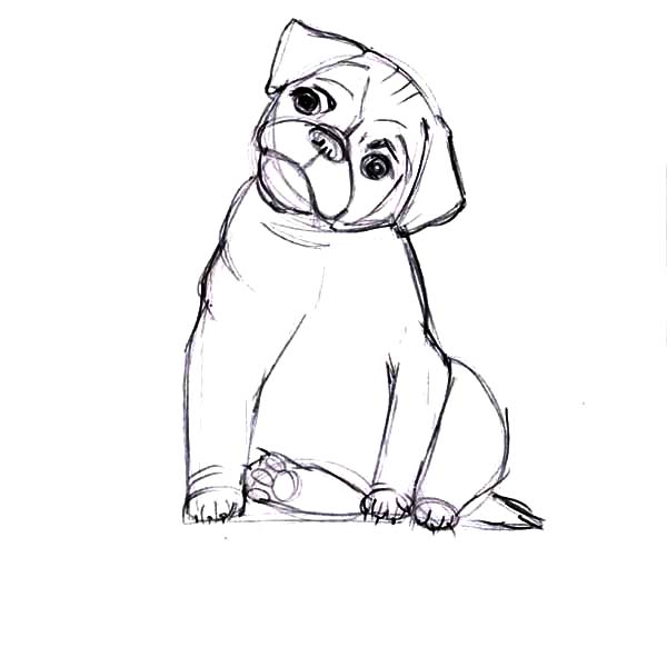 Boxer Dog Move His Head Coloring Pages : Best Place to Color