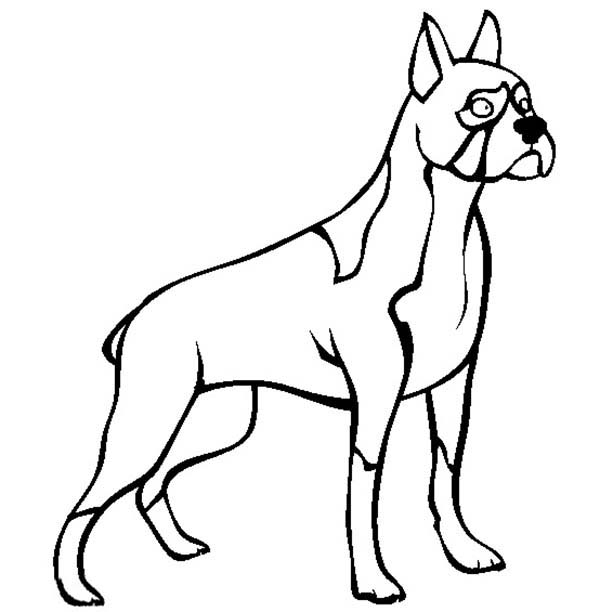 Boxer Dog Standing Tall Coloring Pages: Boxer Dog Standing
