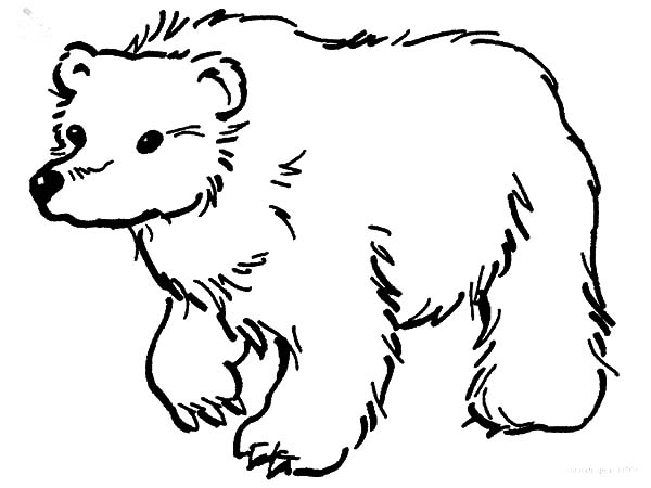 Brown Bear Looking for Food Coloring Pages: Brown Bear