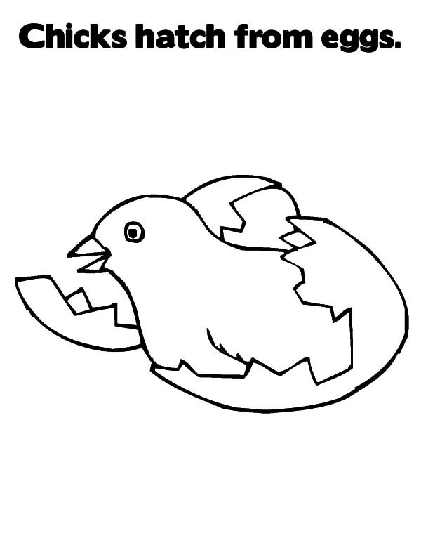 Cracked Eggs Coloring Pages Chick Coloring Pages