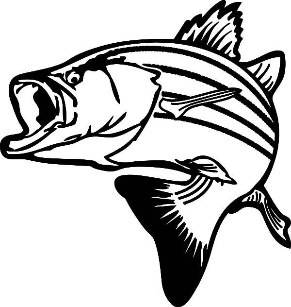 Bass Fish Profile Coloring Pages