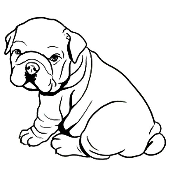 Fat Bulldog Like Towel Coloring Pages : Best Place to Color