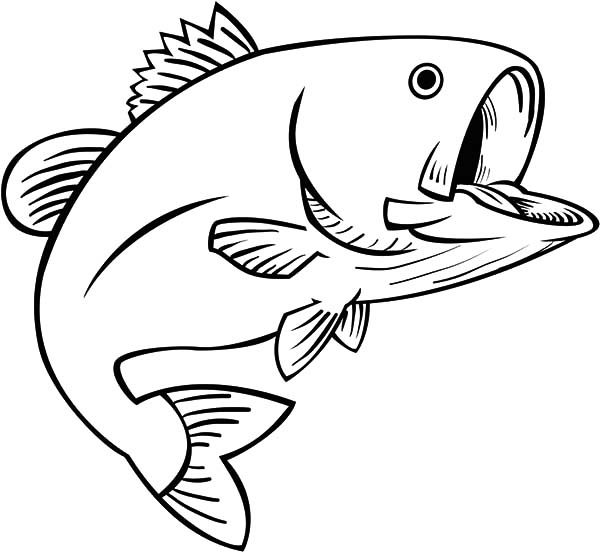 Trout Fish Coloring Pages Apache Open His Mouth Wide