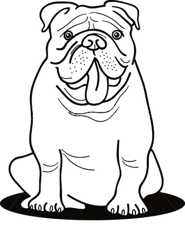 Funny Bulldog Coloring Pages: Funny Bulldog Coloring Pages