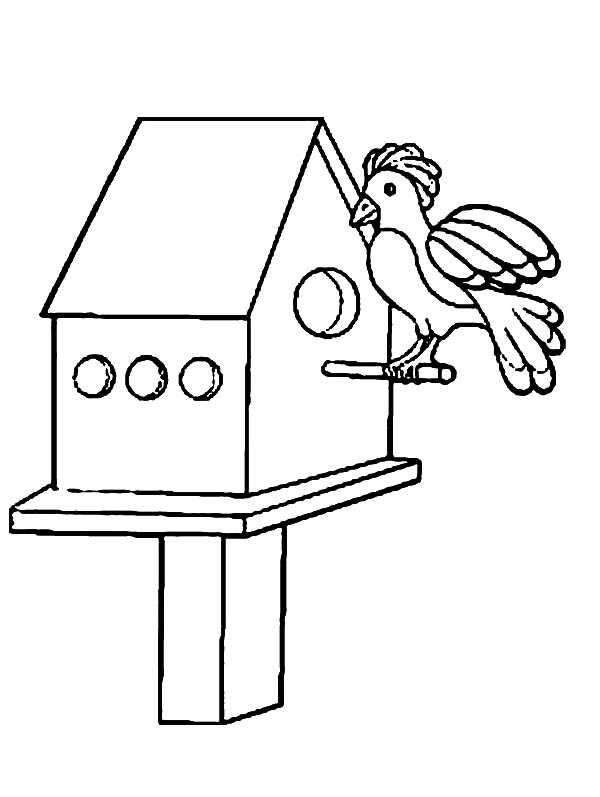 Get Inside Bird House Coloring Pages: Get Inside Bird