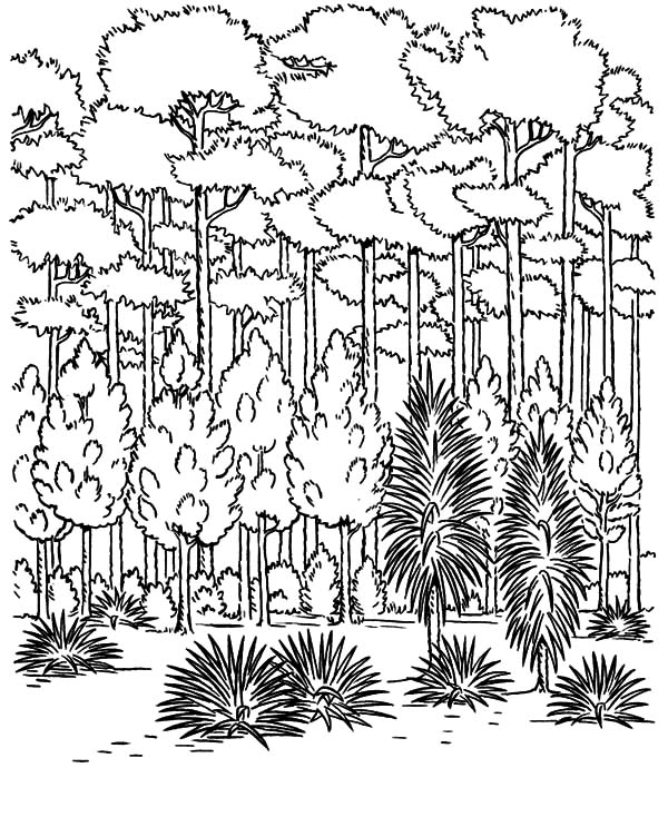 Keep Our Forest Green on Arbor Day Coloring Pages: Keep