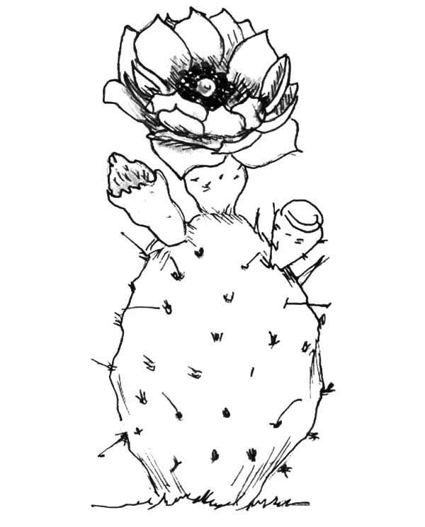 Planting Cactus Coloring Pages : Best Place to Color