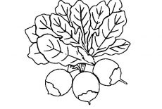 Harvest Beets Coloring Pages : Best Place to Color