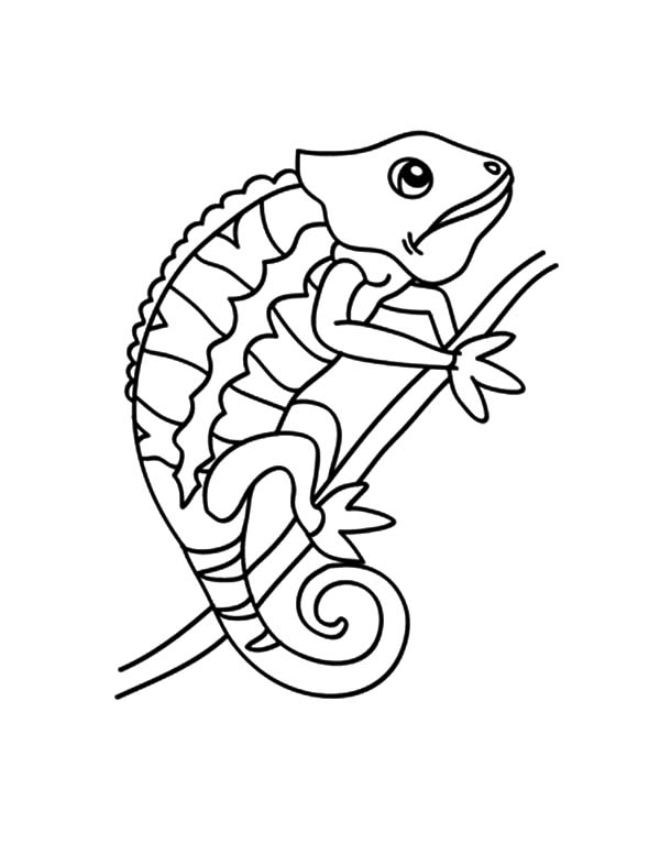 Chameleon Changing Color Coloring Pages : Best Place to Color