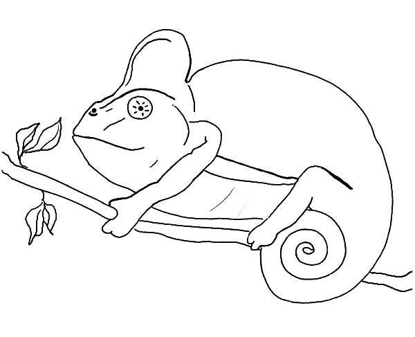 Chameleon Coloring Pages For Kids : Best Place to Color